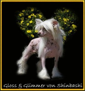 Gloss And Glimmer von Shinbashi